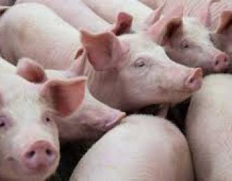 La carne de cerdo de capa blanca es sabrosa, magra y muy   versátil.